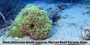 Deniz bilimcinin büyük başarısı: Mercan Resif Koruma Alanı