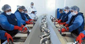 ABD'ye balık ihracatında rekor artış