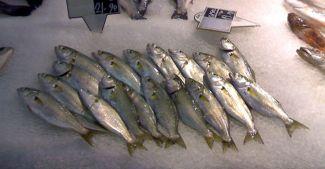 Balıkçılardan bakanlığa çağrı: Engelleyin!