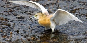 'Manyas Gölü için acilen adım atılması gerekiyor'
