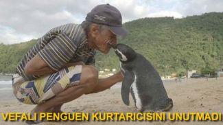 Vefalı penguen kurtarıcısını unutmadı