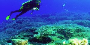 Kemer'de 'Deniz Bilimleri Haftası' düzenleniyor