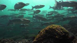 Marmara'da balık nesli hızla azalıyor