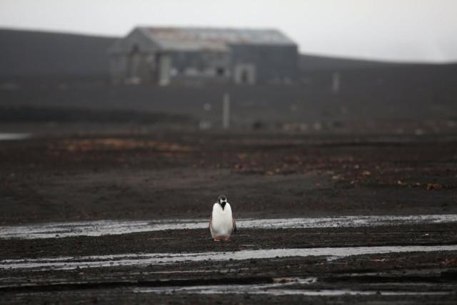 11fotograflarla-yasam-dolu-antarktika-kitasinda-11-10731071_o.jpg