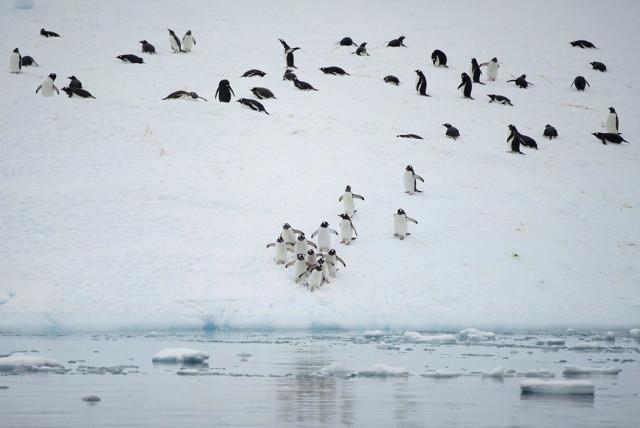 13fotograflarla-yasam-dolu-antarktika-kitasinda-13-10731071_o.jpg