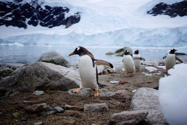 2fotograflarla-yasam-dolu-antarktika-kitasinda-2-10731071_o.jpg
