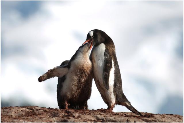 3fotograflarla-yasam-dolu-antarktika-kitasinda-3-10731071_o.jpg