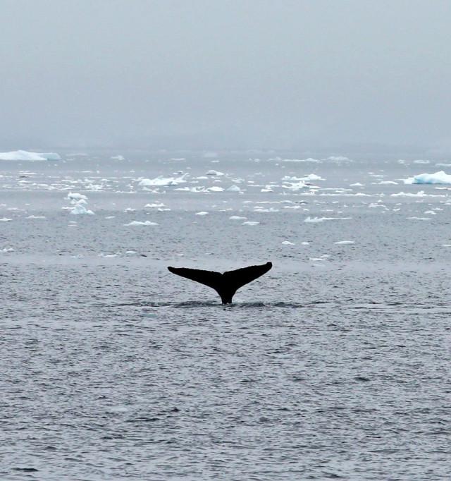 4fotograflarla-yasam-dolu-antarktika-kitasinda-4-10731071_o.jpg