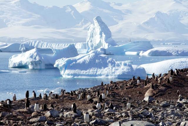 5fotograflarla-yasam-dolu-antarktika-kitasinda-5-10731071_o.jpg
