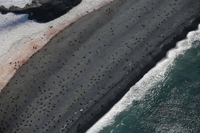 6fotograflarla-yasam-dolu-antarktika-kitasinda-6-10731071_o.jpg