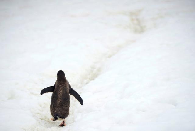 8fotograflarla-yasam-dolu-antarktika-kitasinda-8-10731071_o.jpg