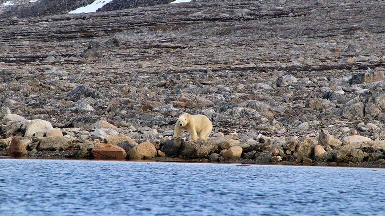arktik2.jpg
