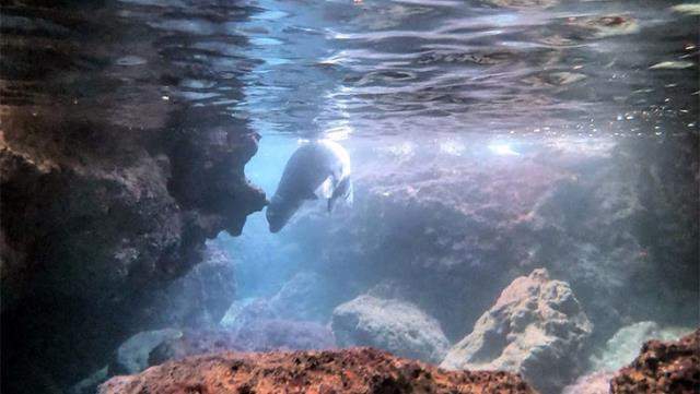 deniz-dibi-temizligi-yaparken-nesli-tehlike-13938175-8218-o.jpg