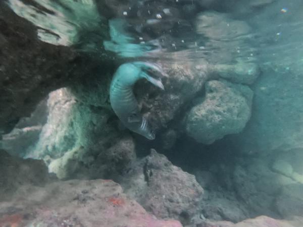 deniz-dibi-temizligi-yaparken-nesli-tehlike-13938175-o.jpg