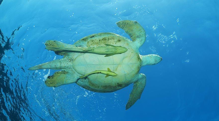 deniz_kaplumbagasi.jpg
