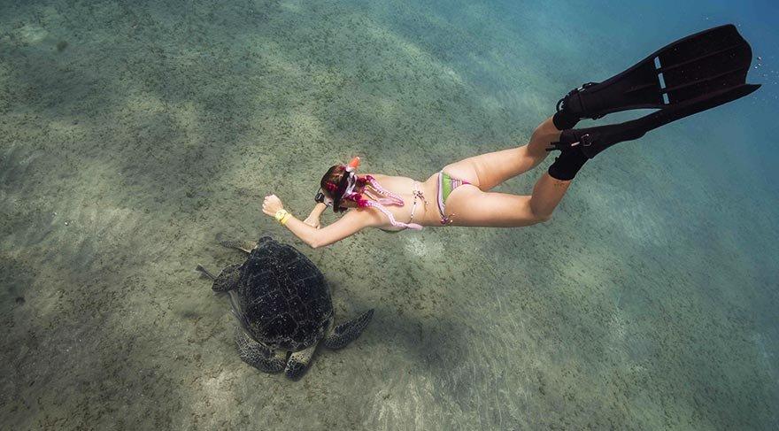 deniz_kaplumbagasi5.jpg