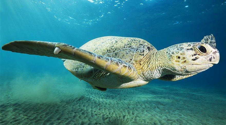 deniz_kaplumbagasi6.jpg