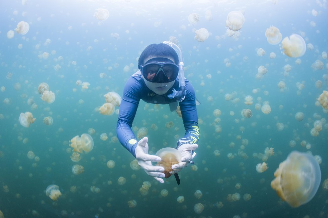 denizanasi-golu10.jpg