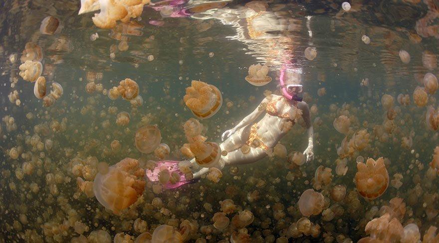 denizanasi-golu6.jpg