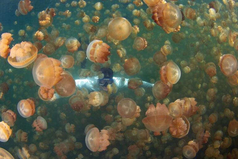 denizanasi-golu8.jpg