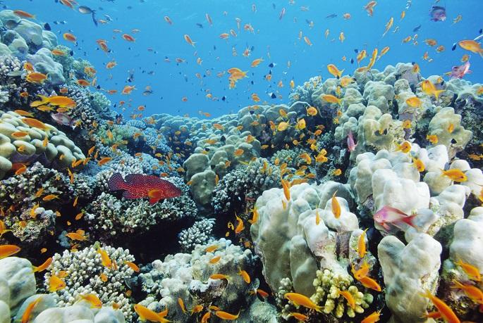 mercan.jpg