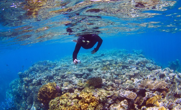 mercan2.jpeg