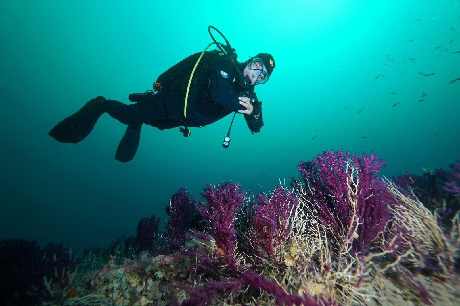 nesli-tukenmekte-olan-kirmizi-mercanlar-canakkale-bogazindaki-batik-gemilerde-hayat-buluyor-5a27c4f.jpg