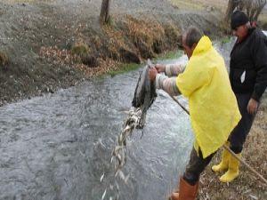 Mahsur kalan balıkları köylüler kurtardı
